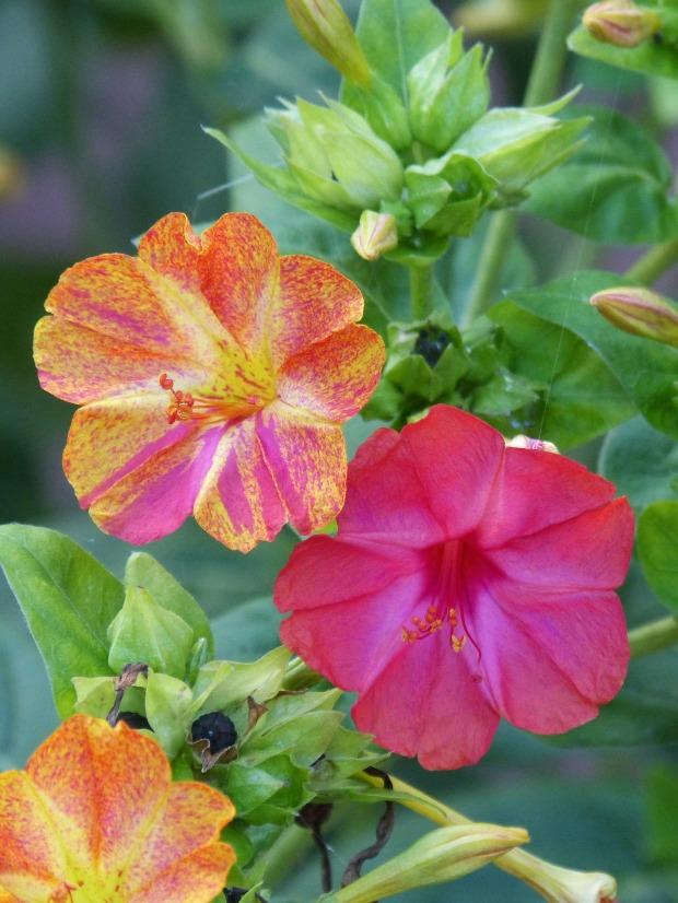 flower-3744246_1920